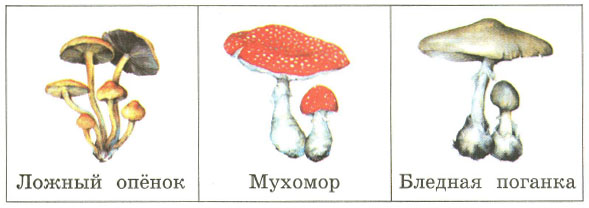 с деятельностью каких грибов ты знаком приведи примеры