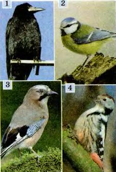 Подготовка птиц к зимовке оседлые перелётные и кочевые  Подготовка птиц к зимовке оседлые перелётные и кочевые