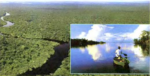 Реки Амазонка Парана Ориноко и озера Титикака Южной Америки  Рис 114 Амазонка