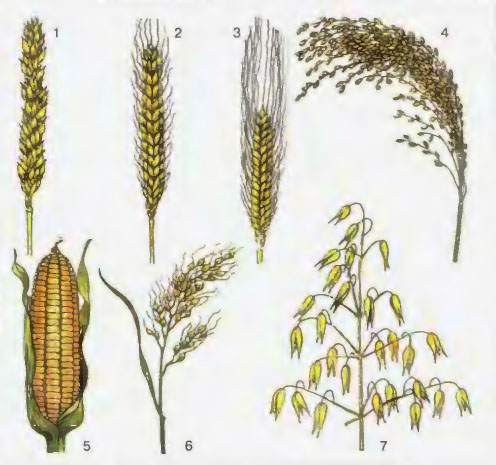 Реферат на тему растения поля 7628